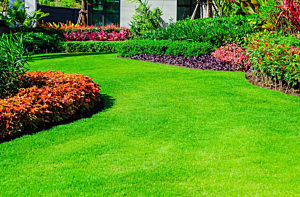 Lawns & Softscapes